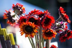 fleurs-canicules