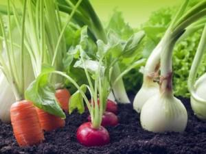 Quels fruits et légumes faire pousser dans son jardin